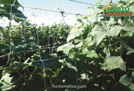 Cucumber Staking Hortomallas Supporting Your Crops 174