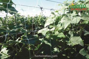 plastic trellis netting for cucumbers