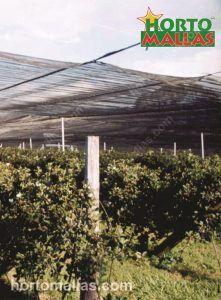 A Malha/Rede de Sombreamento OBAMALLA® estabiliza a intensidade da luz para o cuidado dos cultivos.
