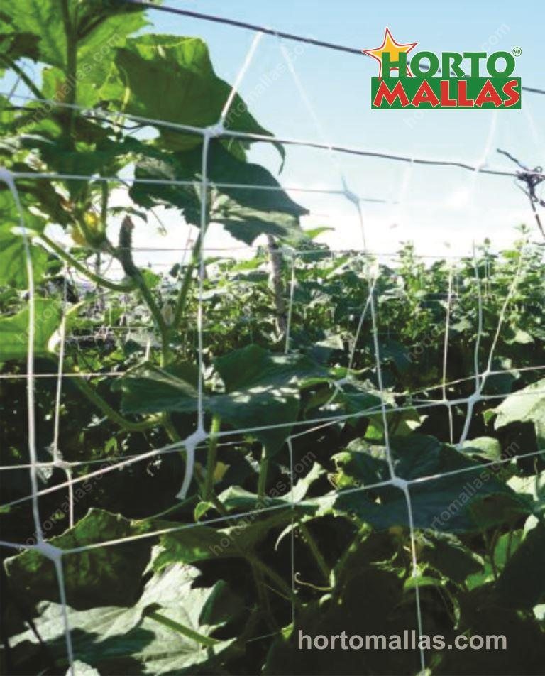 Advantages of Vertical Trellis in growing Vegetables