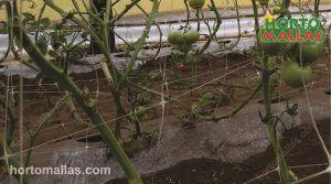 Trellising Plants