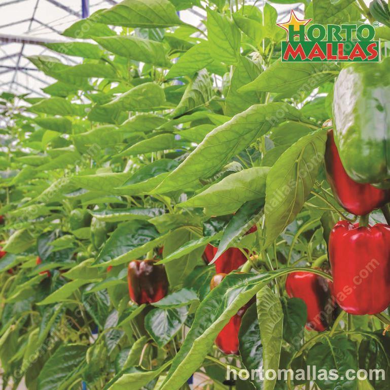 Importance of Plastic Meshing in Gardening