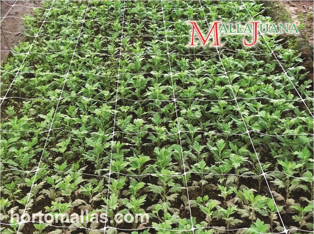 SCROG net. The ideal support for hemp.