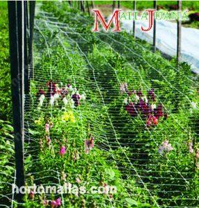 Empleo de mallas plásticas como pantalla para guiar las plantas en su desarrollo vegetativo.