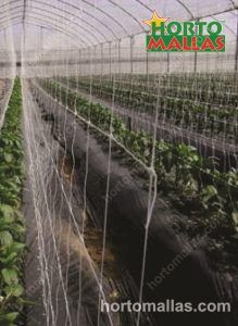 espalier net providing plant support in greenhouse