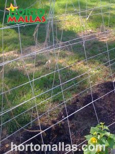 Vegetable trellises with a V shape