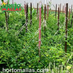 tomato trellises with poles and twine