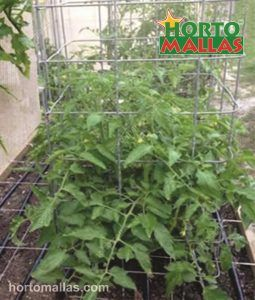 tomato cage in plant crop
