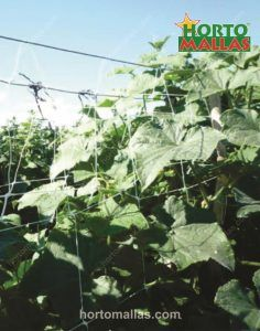 Cucumber support netting to create a trellis