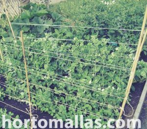 pea netting is better than raffia twine