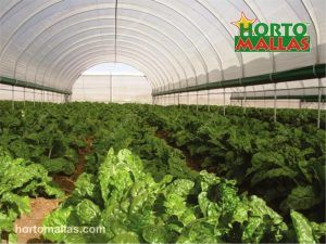 macro tunnel used for protect cropfield