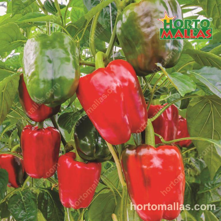 The Benefits Training Peppers And Pruning