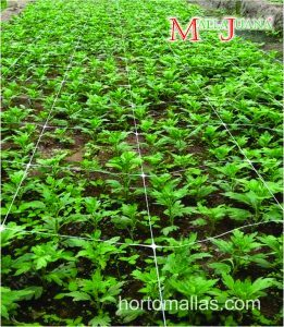The SCROG method utilizes a netting screen to support the plants