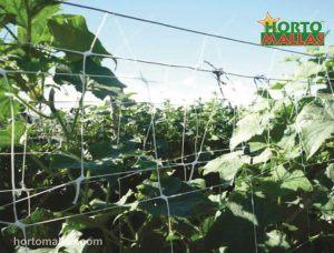 espalier net providing support cropflied