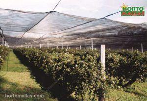 OBAMALLA® sobre o cultivo, controlando a intensidade da iluminação nas plantas.