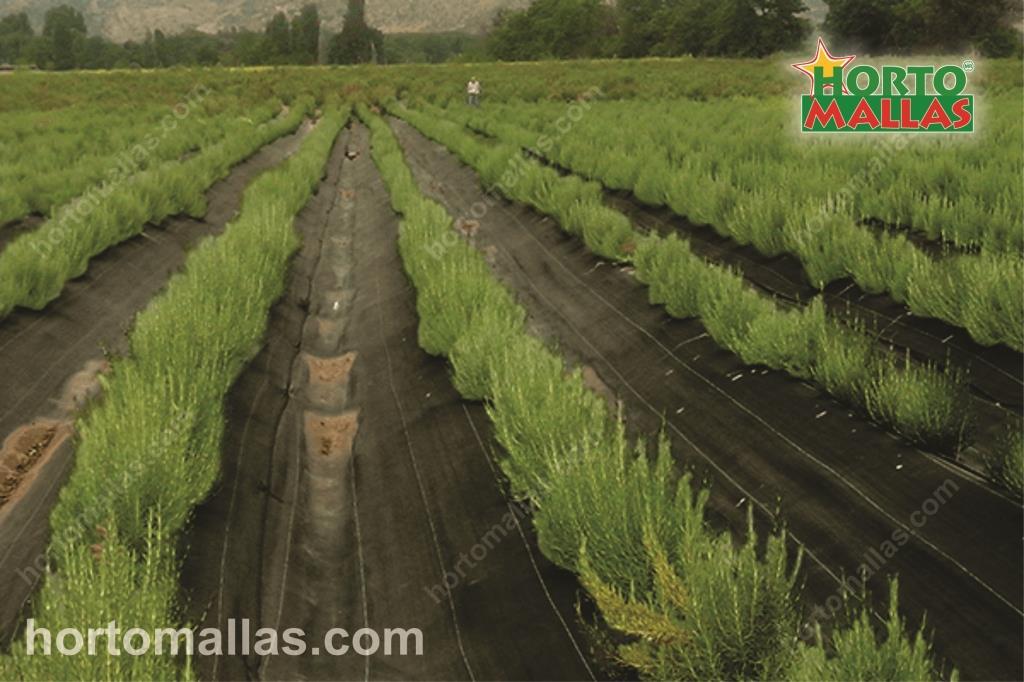 Ventajas de la luz difusa para la producción de hortalizas y perspectivas de ulteriores investigaciones