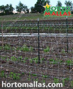 cucumber trellis with T posts