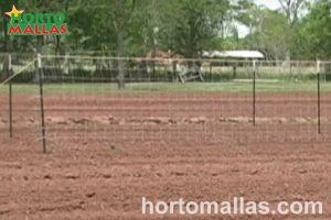 preparation of the land for training tomato plants