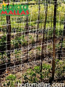 double row of netting to train tomatoes