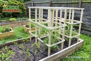 Wood Plant Cages supporting tomatoes