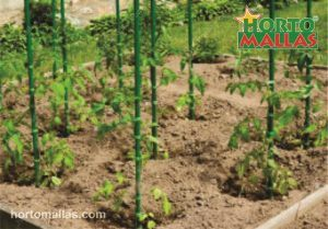 PVC stakes for tomatoes