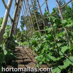 Bamboo vegetable trellis system