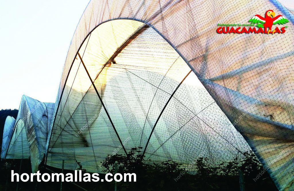 Macro-túnel protegido con la red anti-aves GUACAMALLAS