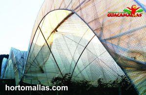 Macro-túnel protegido com a rede anti-pássaros GUACAMALLAS
