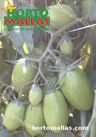 cultivos de tomate com apoio treliça HORTOMALLAS