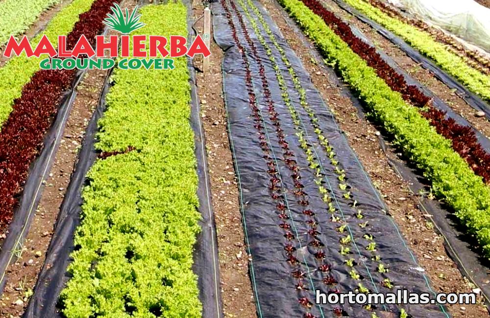 cultivo protegido con tejido cubre suelo MALAHIERBA