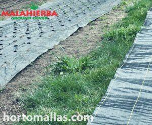 Em áreas cobertas com tecido anti-ervas-daninhas, é praticamente impossível o crescimento de ervas-daninhas.