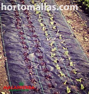 Com a cobertura para o solo MALAHIERBA®, você poderá garantir que suas plantas cresçam tirando proveito de todos os nutrientes da terra.