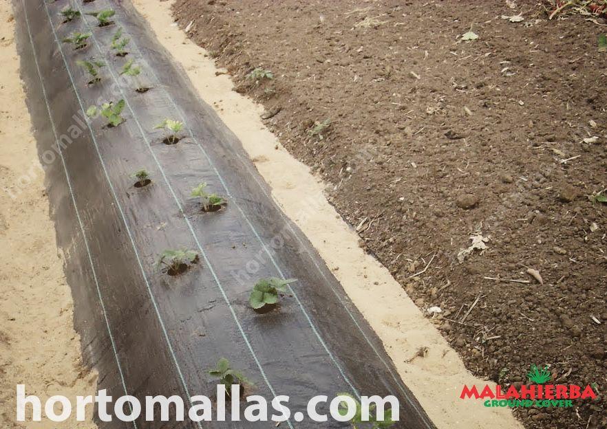 Este tecido protege suas plantas contra as ervas-daninhas, porque impede que as plantas indesejadas cresçam ao seu redor.