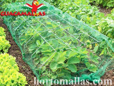 As aves podem ser uma ameaça séria para seus cultivos, por esse motivo você deve usar a malha/rede GUACAMALLAS® para os manter seguros.