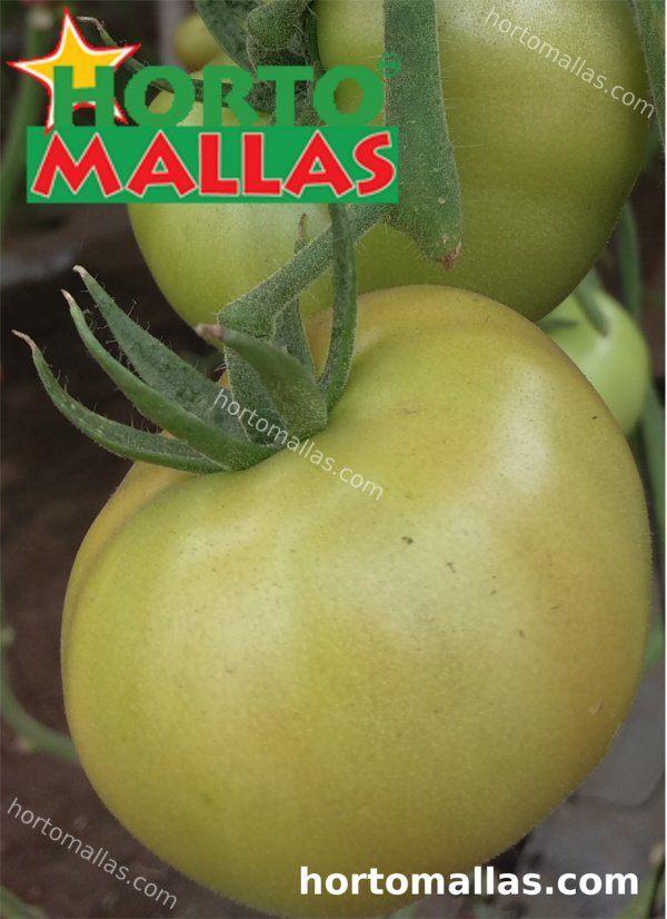 tomate entutorado com rede HORTOMALLAS