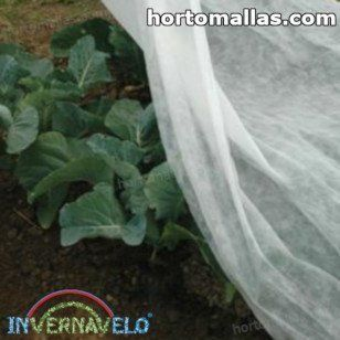frost cloth protecting plant