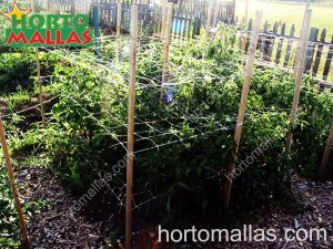 scrog netting helps train plants horizontally