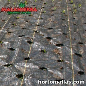 weed fabric installed on crops