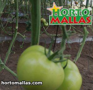 Tomates y rafia agrícola