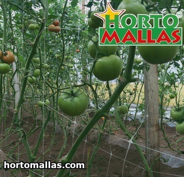 O bom dos tomates é que são fáceis de cultivar.