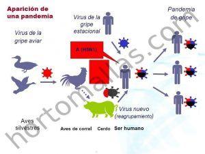 Gripe aviar, infección de gripe aviar, transmisión de gripe aviar