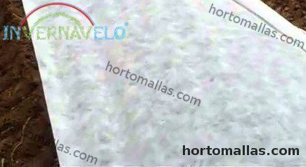 frost fabric protecting crops