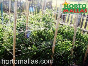 A garden with nylon trellis set with wooden stakes