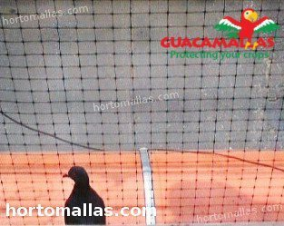 bird net avoiding pigeon attack