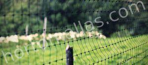 En la imagen se observa la malla anti-pajaros, protegiendo aves contra la transmisión del virus de gripe aviar.