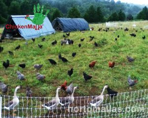 malla para aves de corral como gallinas y patos