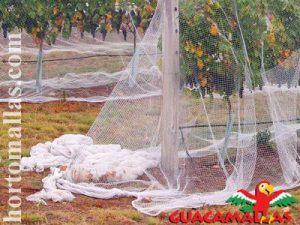 GUACAMALLAS® para protección de cultivos