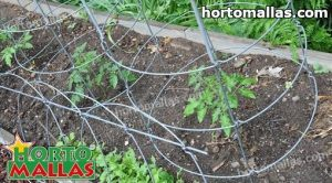 cages installed for support in tomato plant