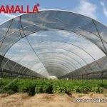 Obamalla para sombrear cultivos