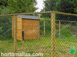 Chicken coop built with chain link fence